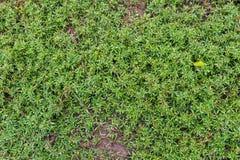 Gras op zand Stock Foto's