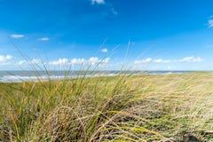 Gras op zandduin met erachter oceaan royalty-vrije stock afbeeldingen