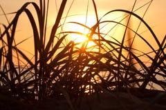 Gras op zonsondergang Stock Afbeeldingen