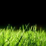 Gras over zwarte achtergrond Stock Afbeelding
