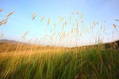 Gras in prairie stock afbeeldingen