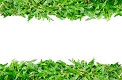 Gras-Rahmen stockfotos