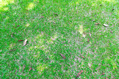 Gras, Rasen und Blätter auf dem Boden Lizenzfreies Stockbild