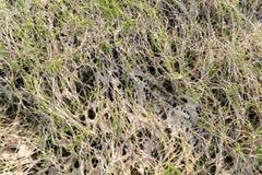 Gras rond het moeras Royalty-vrije Stock Foto's