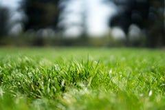 Gras in Rose Gardens royalty-vrije stock foto