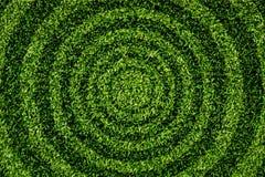Gras-Rundschreibenmuster. Lizenzfreies Stockfoto