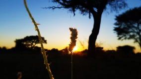 Gras-Samen lizenzfreie stockfotografie