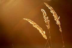 Gras - samenvatting Stock Afbeelding