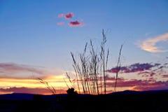 Gras-Schattenbilder am Sonnenuntergang-Himmel mit rosa Wolken Lizenzfreie Stockbilder