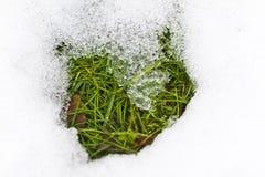 Gras in schmelzendem Schnee Stockbild