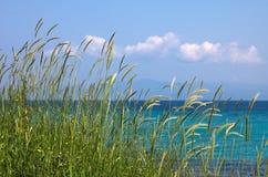 Gras, Seenationalstandard-blauer Himmel Lizenzfreies Stockfoto