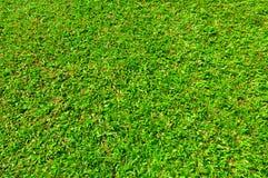 Gras in Siam Stock Afbeeldingen