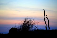 Gras silhouettiert Lizenzfreie Stockfotografie