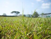 Gras in Singapur lizenzfreies stockfoto