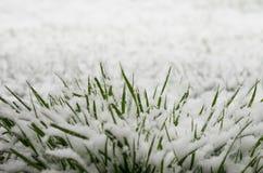 Gras in Sneeuw Stock Foto