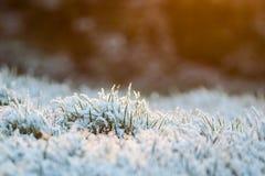 Gras in sneeuw wordt behandeld die Royalty-vrije Stock Afbeelding