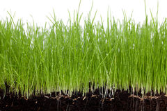 Gras and Soil Royalty Free Stock Photos