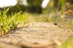 Gras-Sommer Stockbild