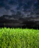 Gras in stormachtig weer Royalty-vrije Stock Afbeeldingen