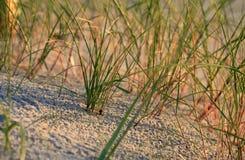Gras am Strand stockbilder