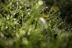 Gras, Tau und Falllicht Stockfotografie