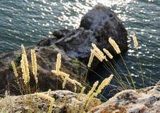 Gras tegen bergen royalty-vrije stock foto's
