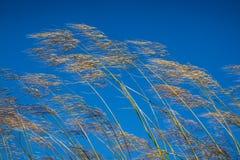 Gras tegen blauwe hemelachtergrond Royalty-vrije Stock Foto's
