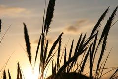 Gras tegen de hemel Stock Foto's