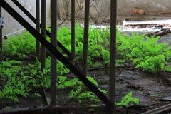 Gras in Tschornobyl Stockfotografie
