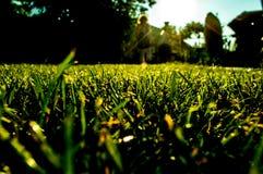 Gras in tuin dichte omhooggaand royalty-vrije stock foto