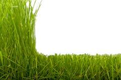 Gras u. geschnittenes Gras Stockbilder