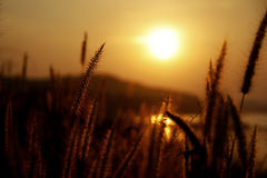 Gras u. Sonnenuntergang Stockfotos