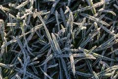Gras in uiterst kleine ijskristallen dat wordt behandeld stock afbeelding