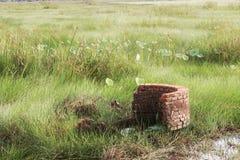 Gras und alte Blöcke Stockfotos