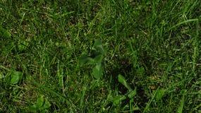 Gras und Anlagen Stockbild