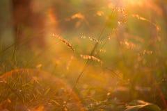Gras und Anlagen im orange Sonnenlicht im Sonnenuntergang Lizenzfreie Stockbilder
