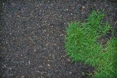 Gras und Asphalt Lizenzfreie Stockfotografie