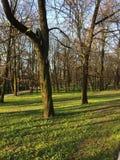 Gras und Bäume Stockbild