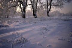 Gras und Bäume abgedeckt mit Schnee stockfotografie