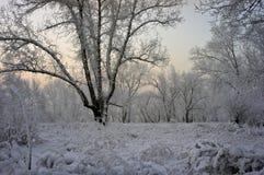 Gras und Bäume im Schnee stockfotos