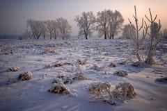 Gras und Bäume bedeckt mit Frost und Schnee stockbild