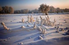 Gras und Bäume bedeckt mit Frost und Schnee lizenzfreie stockfotografie