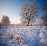 Gras und Bäume bedeckt mit Frost und Schnee lizenzfreie stockbilder