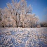Gras und Bäume bedeckt mit Frost und Schnee lizenzfreies stockbild