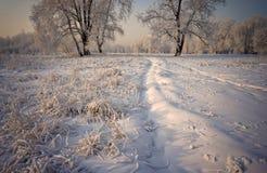 Gras und Bäume bedeckt mit Schnee stockbilder