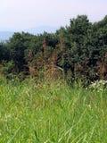 Gras und Baumlandschaft Lizenzfreie Stockfotos