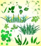 Gras und Blätter Stockfotografie