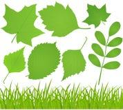 Gras und Blätter Stockfoto