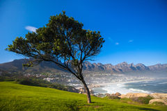 Gras und blauer Himmel Stockfotografie