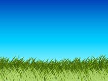Gras und blauer Himmel Lizenzfreies Stockfoto